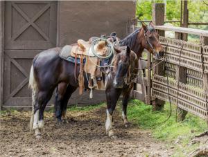 Professional's Choice Cowboy Felt Air Ride Roper Pad