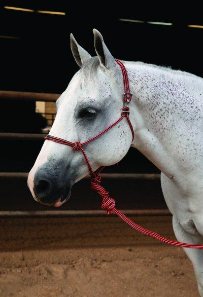 Professional's Choice Easy On Rope halter naruriimu setti